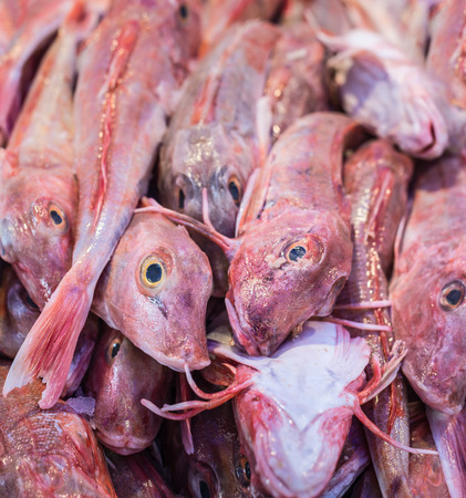 box of red gurnard in a Dutch market