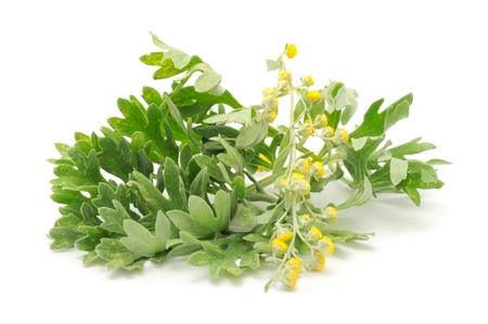 Photo of the herb wormwood