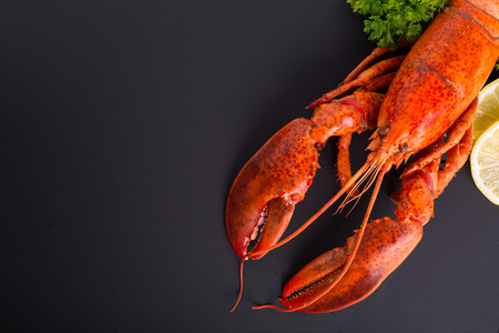 cooked Canadian lobster